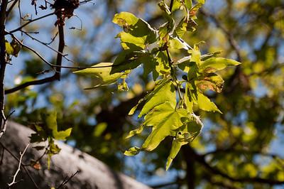 Wildwood Park May 2010 (10 of 34)