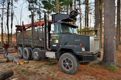 Wilkins Dead Tree Removal