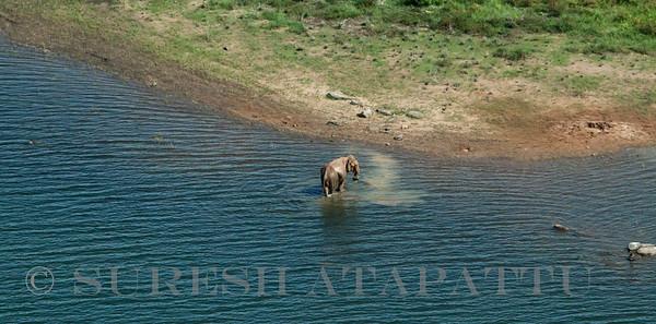 Wild elephants at Maduru Oya National Park