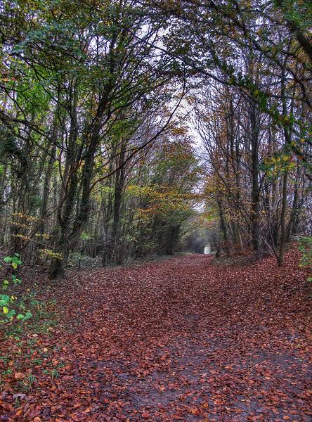 Woodland track adjacent to Ackling Dyke (Roman road) at Harley Gap, Monkton up Wimborne.