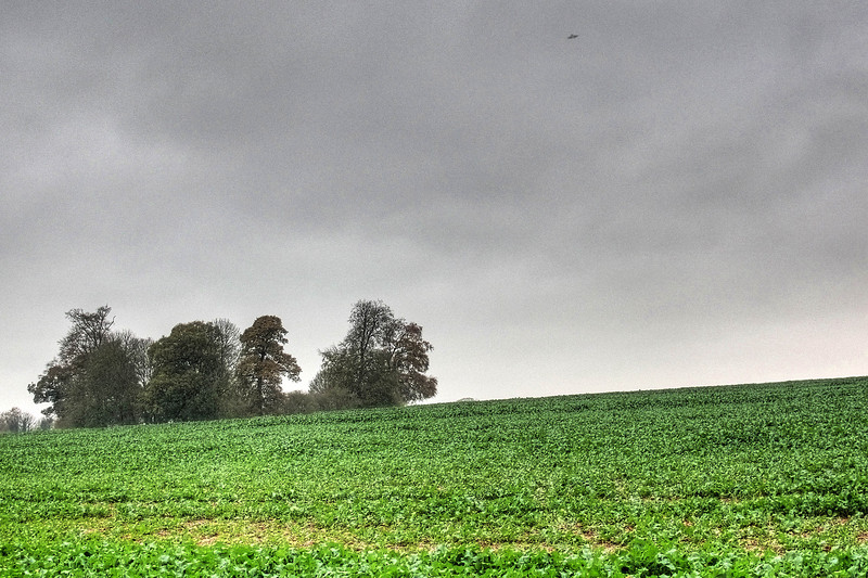 A Buzzard hovers over fields at Brockington.