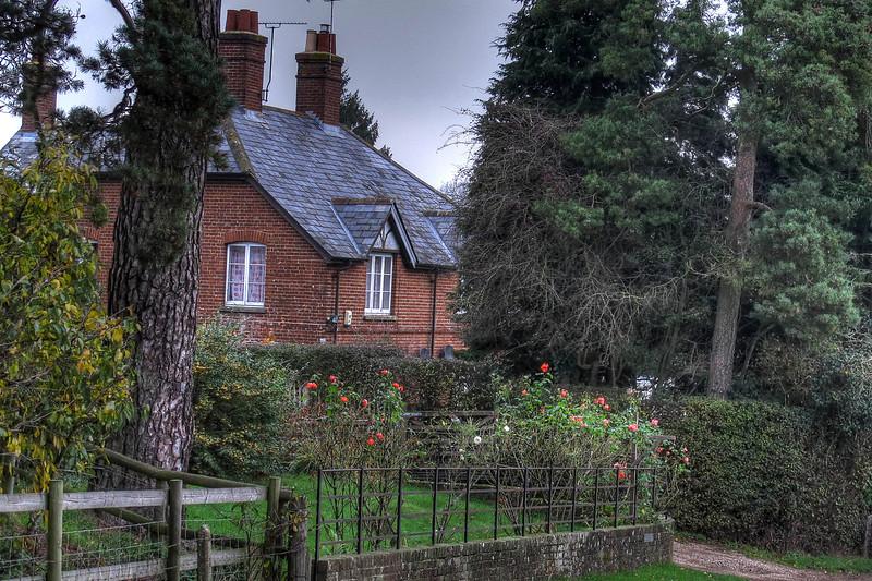 Roses still bloom in November at Wimborne St Giles.