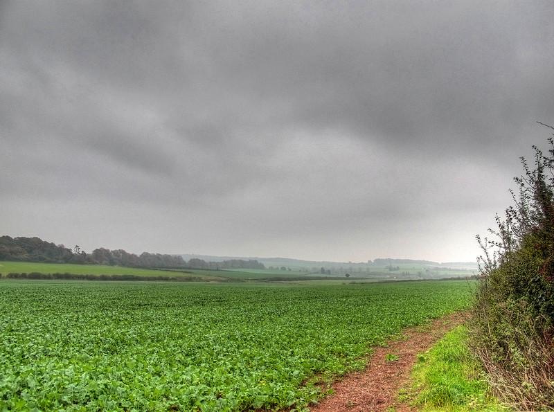 Young kale growing at Brockington Down.