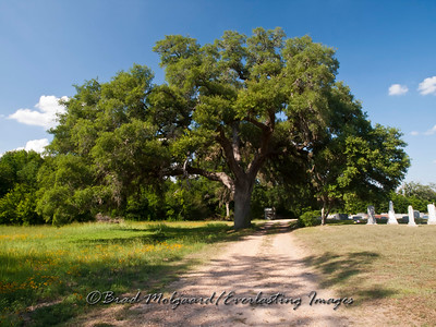"""Grand Tree in Wesley"" - Wesley Brethren Church-Brenham, Texas"