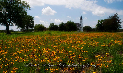 """Black-eyed-Susan Array"" - St. John the Baptist-Ammannsville, Texas"