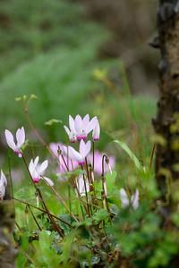 Winter Floreshing