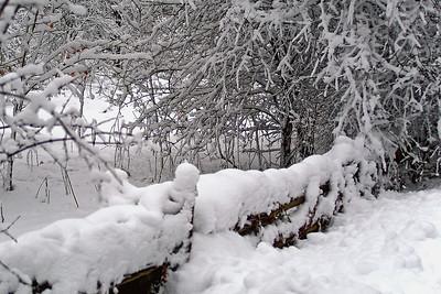 Winter On Old Carp Road