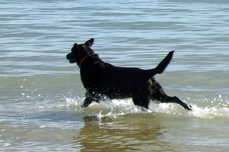 Lucy does a stylish entry into the water.