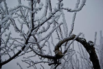 Frosty curve