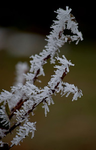 Crystal twig