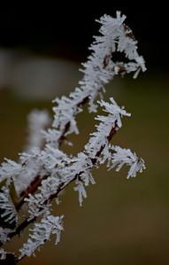Crystal twig