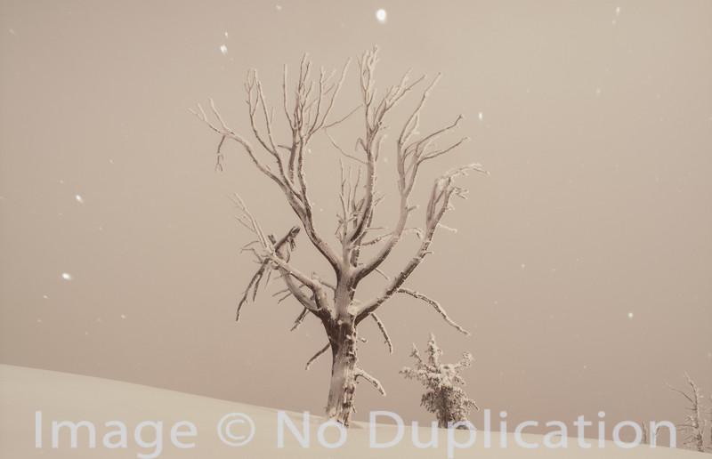 Winter skeleton, Avalanche Peak, Boulder Mountains, Idaho