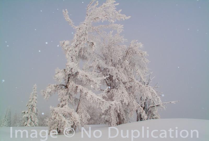 Winter drapery, Boulder Mountains, Idaho