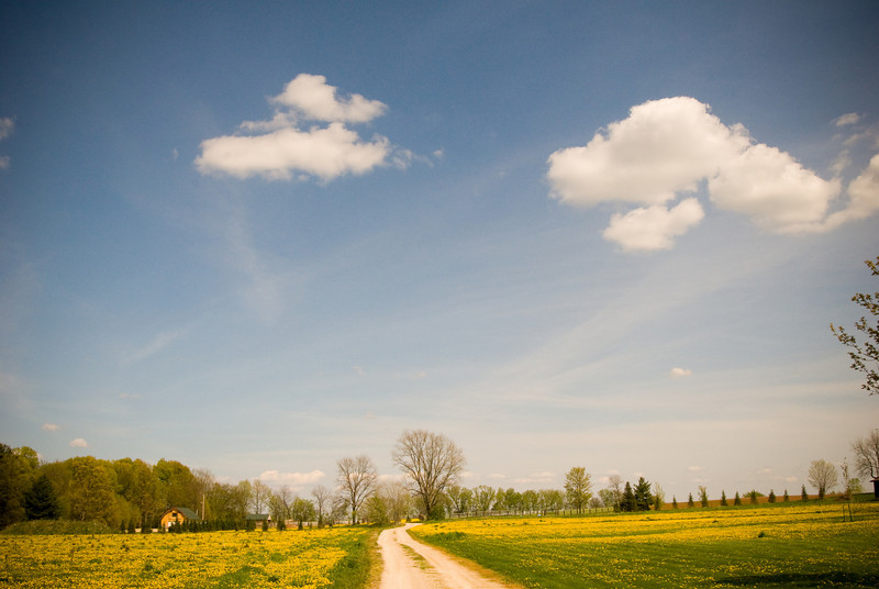 A road winds off into the horizon in Amish country in Northeastern Wisconsin.
