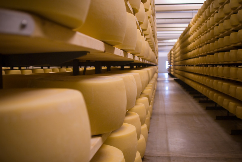 American Grana cheese wheels undergoing affinage (aging) at the<br /> BelGioioso plant in Pulaski.