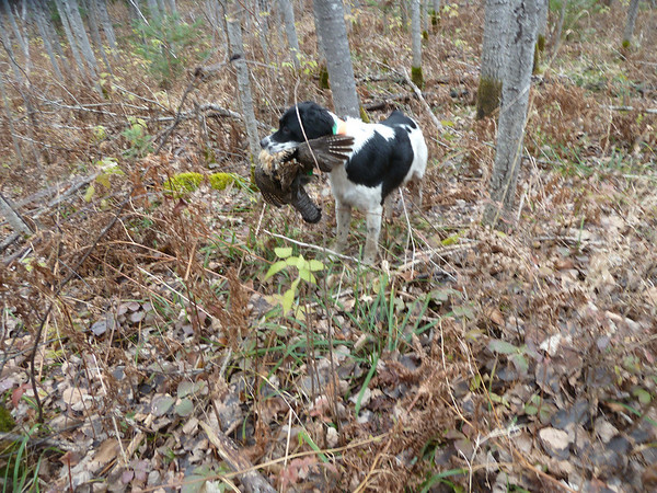 Wisconsin Grouse 2011