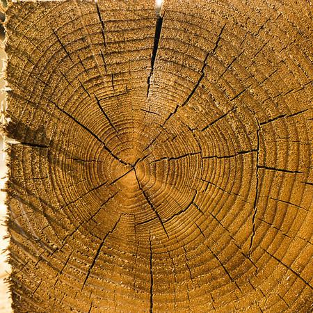 Wood yard visit