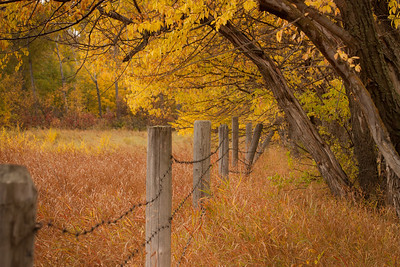 Fall in the Meadow