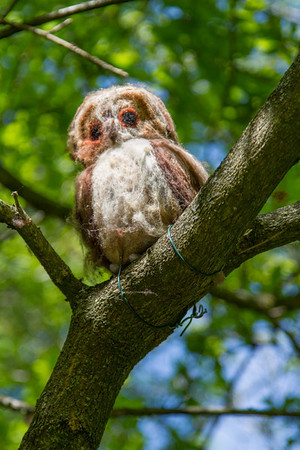 Wol by Chris Williams