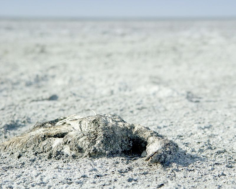 Dead bird, Great Salt Lake, Utah. Gross!<br /> <br /> Recommended Sizes: 4 x 5, 8 x 10, 16 x 20