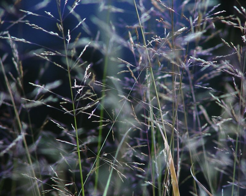 Grass<br /> <br /> Recommended Sizes: 4 x 5, 8 x 10, 16 x 20