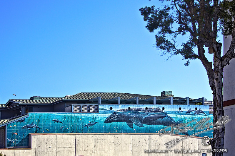 The Whaling Wall-1996-Wyland <br /> One Day Road Trip - Beach Cities from Encinitas to Mulholland Drive.<br /> by Jack Foster Mancilla - LensLord™