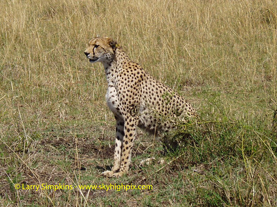 Maasai Mara national park, Kenya, August 2004. Image# 0073