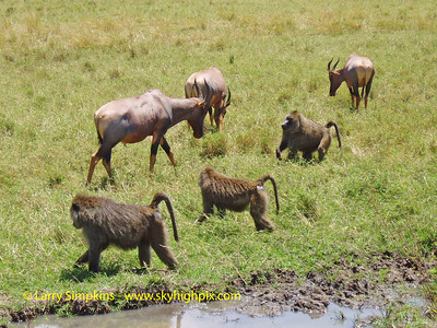 Maasai Mara national park, Kenya, August 2004. Image# 0090
