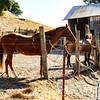 Gallagher North Bend Ranch near Pt. Reyes