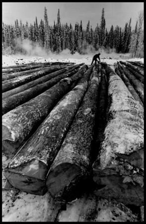 Logging Peace River Alberta, Canada