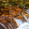Cascade Creek, Grand Teton NP