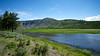 A blue river flows through the green wilderness of Yellowstone National Park.