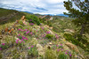 Patches of bright pink flowers grow under a cloudy sky on a Wyoming hillside.