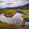 Beaver dam off Gallatin Rd, Wy