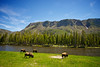 Four buffalo graze alongside the Yellowstone River in our nation's first national park.