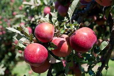 X- Bar Orchard