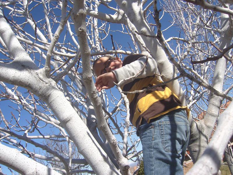 AND A TREE CLIMBER