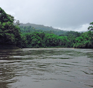 An Amazon River tributary already running full.