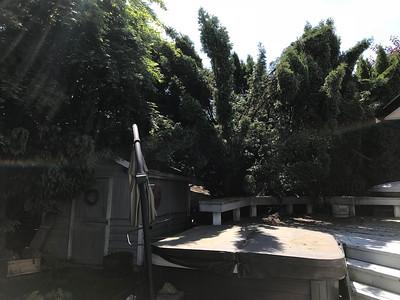 Yard: Before (May 2018)