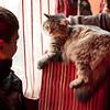 ленивый кот в кафе рядом с гостиницей