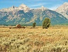 Mormon Barn_D3S1429
