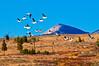 White Pelicans_DSC7950