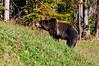 Grizzly_DSC8011