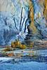 Dead Tree in Travertine_Upper Terrace Drive_YNP_D3S0696