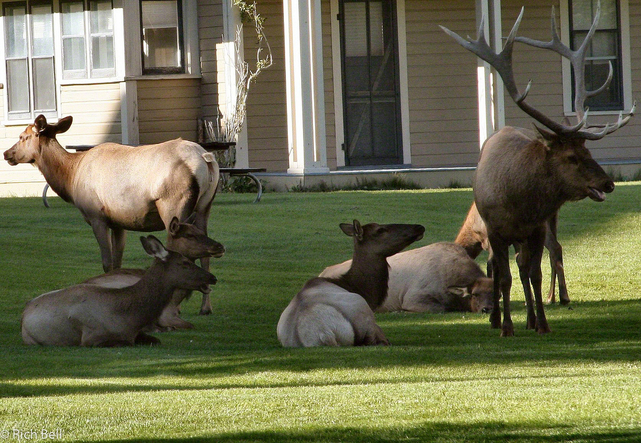 20100721 Yellowstone NP 0050