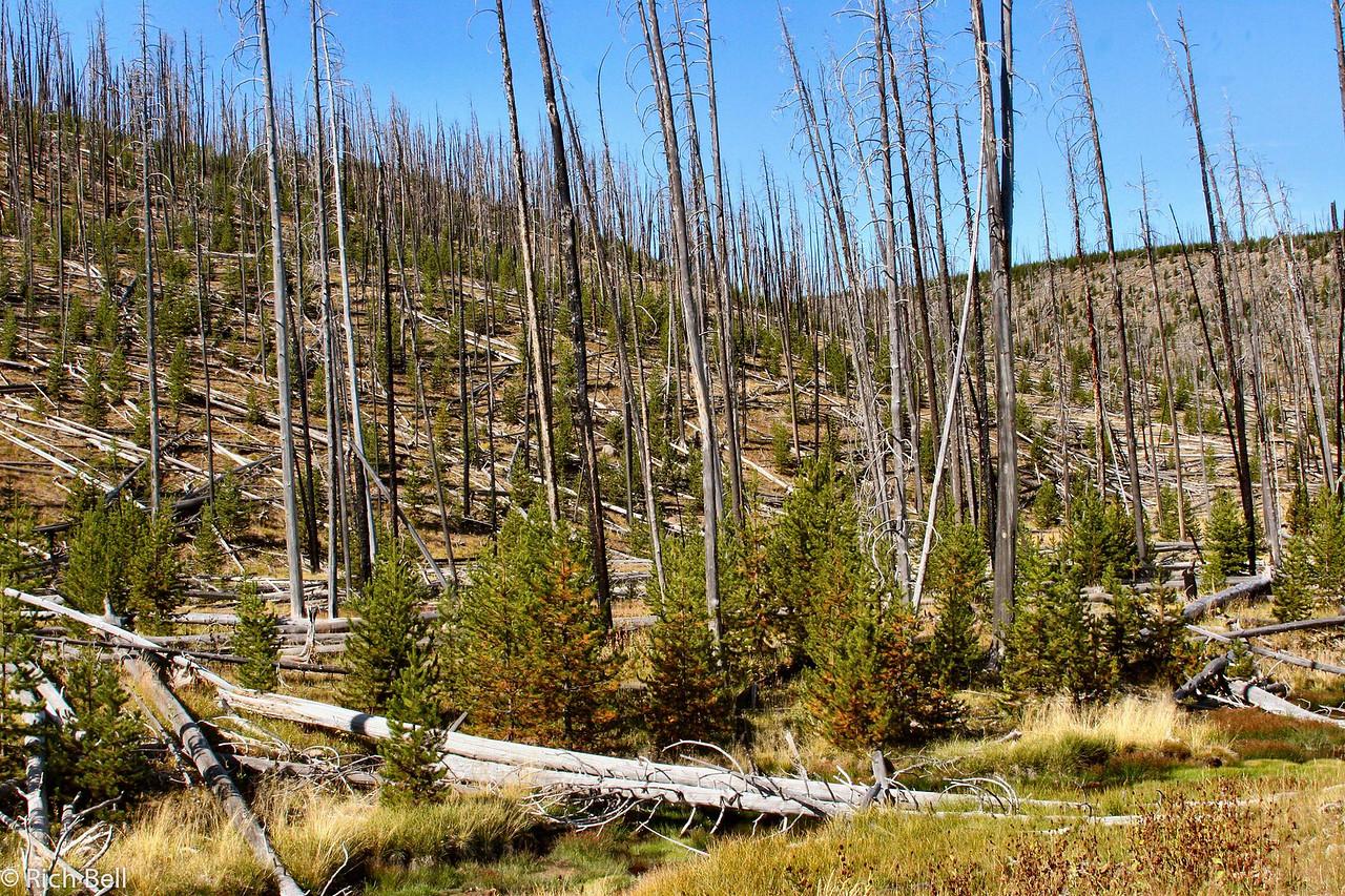 20100721 Yellowstone NP 0051