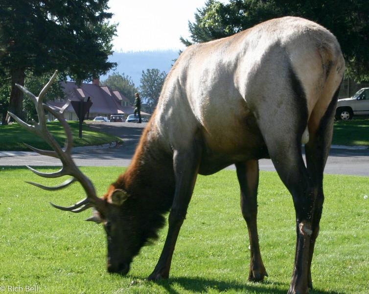 20050906 Yellowstone NP 0005