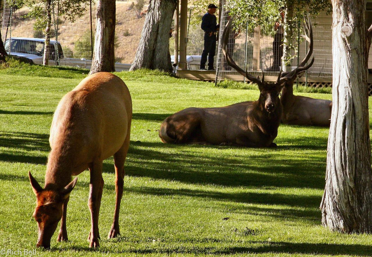 20100721 Yellowstone NP 0045