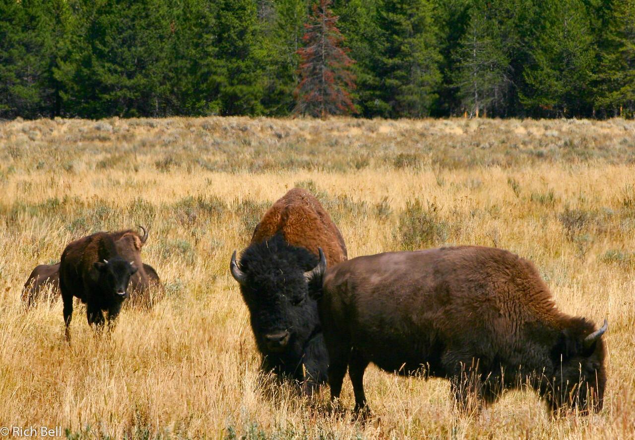 20100721 Yellowstone NP 0033