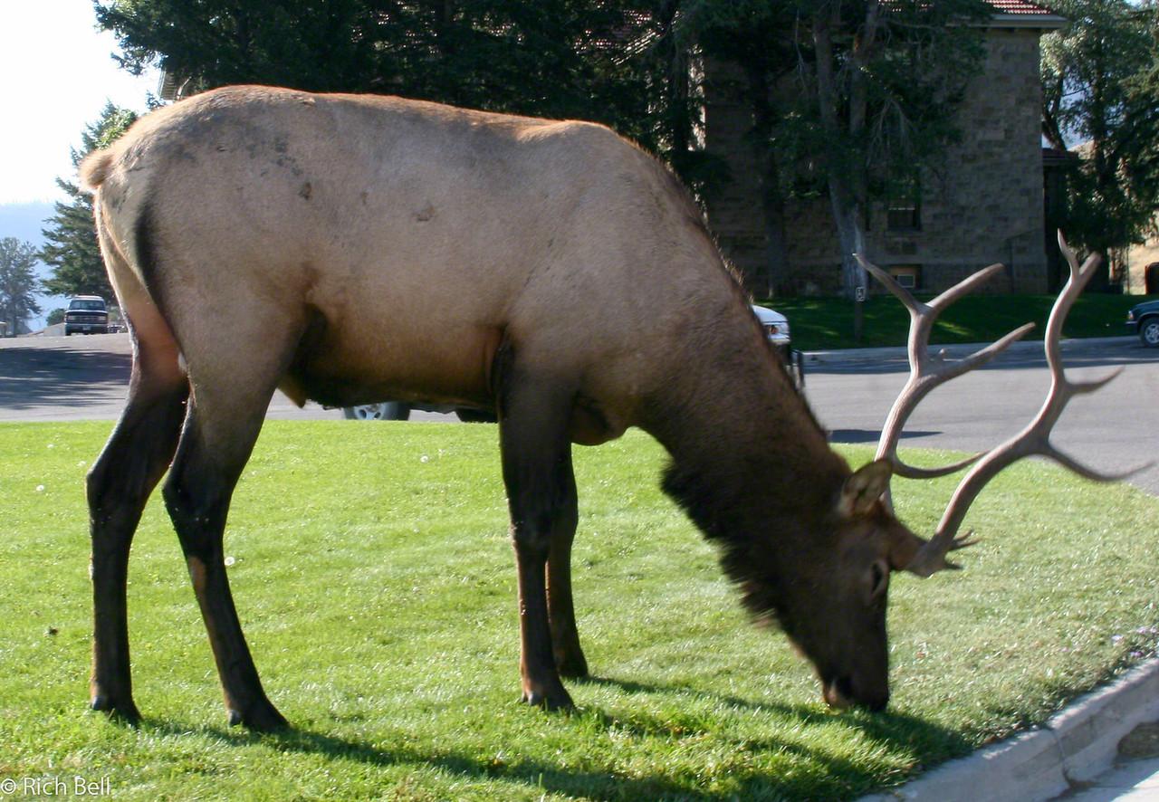 20050906 Yellowstone NP 0004